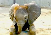 ELEGANT ELEPHANTS ♥♥♥♥ / by Raquel Candanedo-Luciano