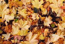 Autumnal Feels