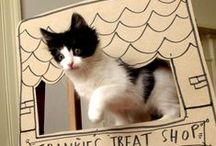 Fun-times for Frankie: Cat DIYS / Games and DIY's to try out with our kitten, Frankie!  / by Nikki McWilliams