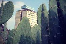 Tlatelolco / Postales de Tlatelolco