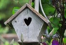Bird Crib / by Loree Horony
