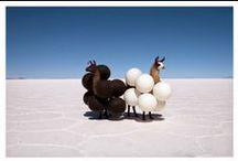 animal shoots / by Mariah Brownwood