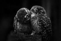 BEAUTY IN BIRDS / by Alexandra