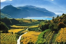 Italy's South Tyrol / Imagine an unspoilt mountain region that oozes Italian warmth and laid-back Austrian charm. Grand fortresses and castles embedded in orchards and vineyards. Alpine landscape meets Mediterranean climate - 300 sunny days a year. See more on TouchingNature.co.uk