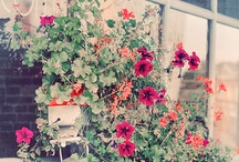 ❀ Garden ❀