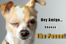 Posse Memes / Some of our memes created by our own Danny Hall and crew