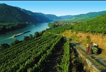 There's more to Austria than the Alps! / Including the gorgeous Wachau Valley, which is only an hour from Vienna, and the warm sunny Burgenland - the gateway to Hungary. Many attractions wonderfully undiscovered by International Tourists. See more at TouchingNature.co.uk