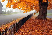Fall / by Hayley Frerichs