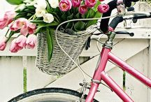 Bikes and Baskets