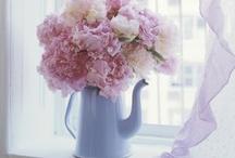 Beautiful Bouquets / by Stephanie Owen-Williams