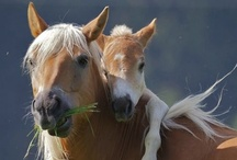 ALL THE PRETTY HORSES / by Justine Smith