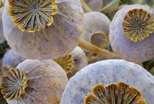 seeds & pods / Plant forms / by See Cunda