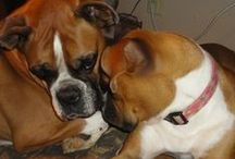 I Love My Dog ( Boxer) / by Bertha Autry
