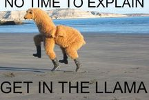 Giggles  / Funny random things that make you LOL  / by Krystal Ford
