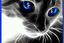 Kentucky Wildcats / by Bertha Autry