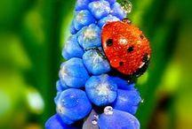 Spring fling! / by Lisa Bosley