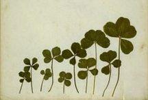 flowery & greens