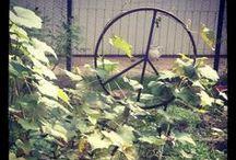 My Garden / by Judith Gale