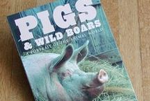 Piggy Book + Related / Book / Book Related Toy