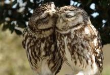 Owls / by Brenna Ceallaigh