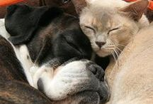 Love My Animals / by Donna Zimple-Harmon