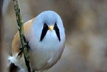 Hey Bird!