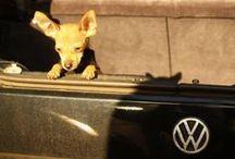 VW's Best Friend