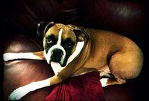 Baby Dog / Brady / by Megan Turner