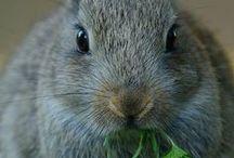 Bunny! Mo Bunny!