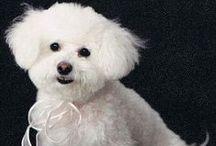 Tyndale Employee Pets