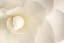 Fleurs / by Avenue Fleur