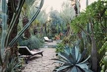 Garden love / by Kat Bevel