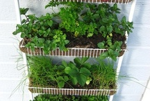 Herb Veggie Garden / by Elizabeth Robillard