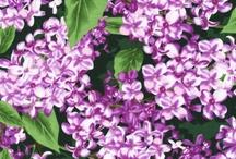 State Flowers II