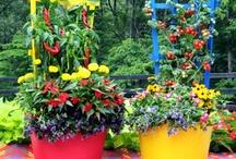 Planters, Pots 'N Baskets