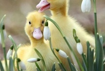 Spring/Easter/Summer