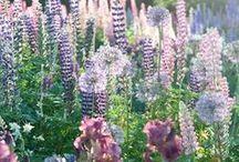 florals / floral inspiration