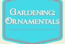 Gardening: Ornamentals / Growing a beautiful garden