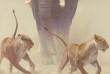 Elephant Infatuation / My Chief Totem / Spirit Animal  / by Susan Apolonio