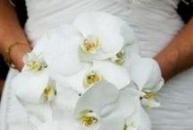 Wedding bouquets / A few ideas on wedding bouquets, we have added some thoughts on each style. If you wish to know more, do contact us on info@medweddings.com