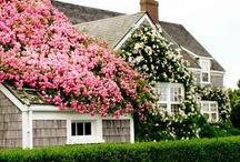 Floral / by Brandi Lee Evans