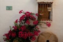 Andalusia Wedding Venues / Spain - Warm sunny beaches, snowy mountains, fiery flamenco, mouth watering tapas, fiestas and ferias. Spain has it all. Let us add some exotic, spanish passion to your wedding.  Contact us for your spanish cortijo (spanish estate) wedding.