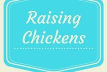 Raising Chickens / Raising chickens for eggs and meat