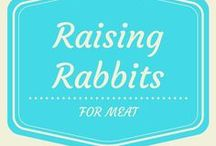 Raising Rabbits for Meat / Raising rabbits for meat and fur