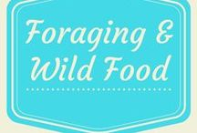 Foraging and Wild Food / How to forage for wild food