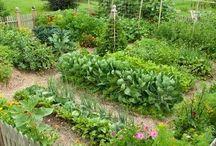 Edible garden's / by Rebecca Miller