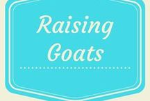 Raising Goats / Raising goats for milk and meat