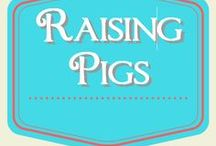 Raising Pigs / Raising pigs for meat
