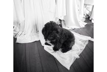 Johanna Johnson's dog Colin Firth