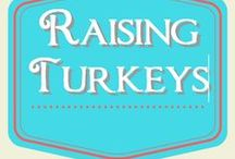 Raising Turkeys / raising turkeys for meat